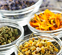Herbal Medicine Short Course (Herbs for Everyday Living)