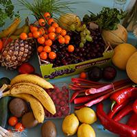 fresh-fruit-veg