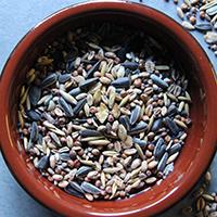 seeds-millet