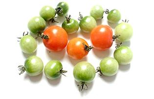 tomato-isolated-vegan
