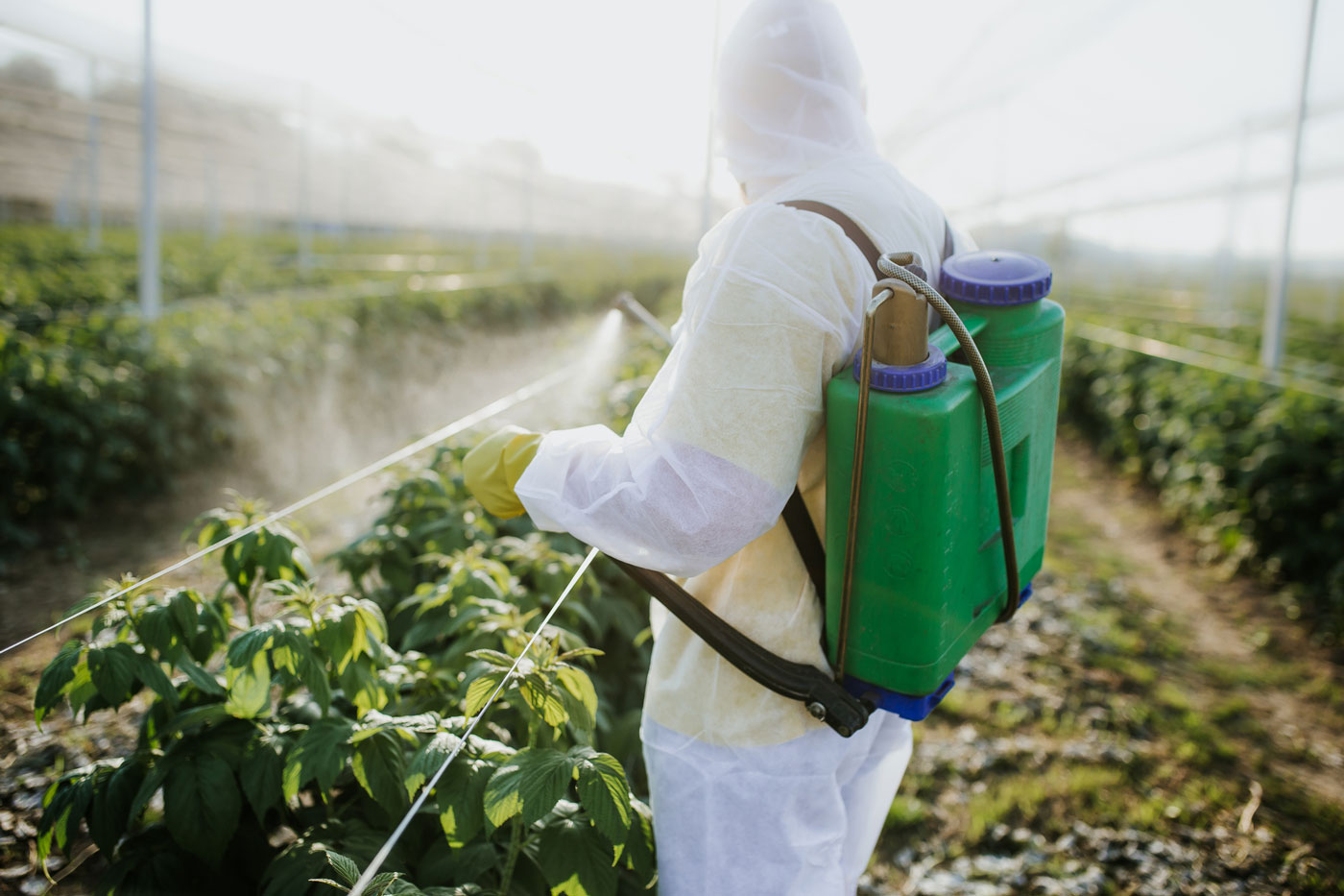 How to Remove Pesticides From Your Produce - CNM College of Naturopathic Medicine