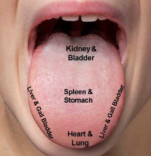 Tongue Diagnosis Map Organs - Year 1 of 3 - Acupuncture Course with CNM