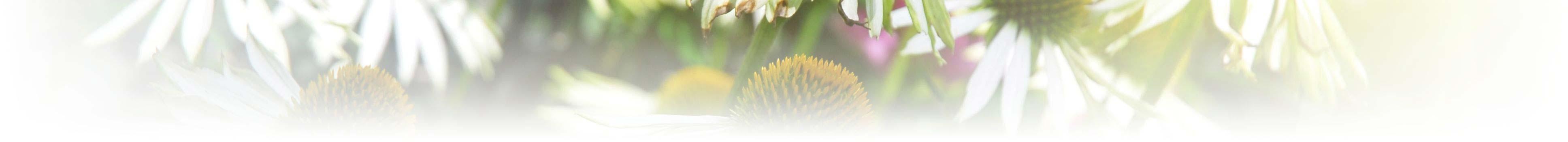 naturopathy-fade